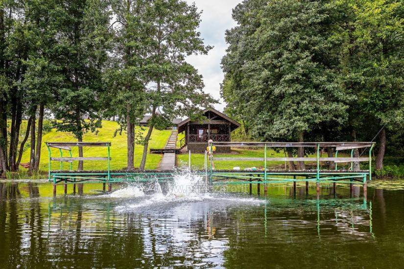 Holandes parks – majas un Vasarnīcas īre - 30