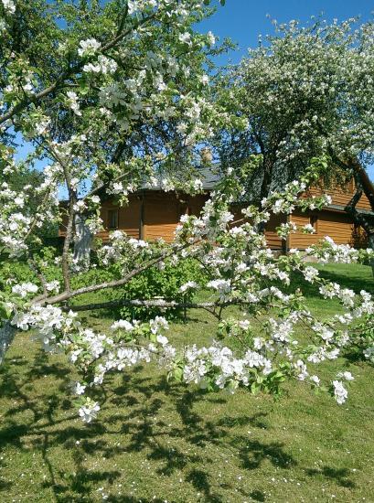 Lauku sēta Adomėnų sodyba - klusa, koku ieskauta Molētu rajonā - 26