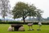 "Villa Skuodas rajona ""Gervių gūžta"": banketu zāle, sauna, guļamistabas"