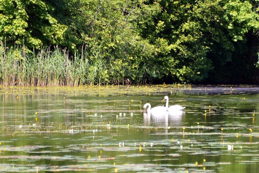 Dringis sēta krastā ūdens dīķī - 37