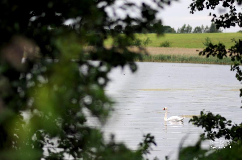 Lauku sēta svētkiem un atvaļinājumam ezera krastā Alītas rajonā Atesys - 57