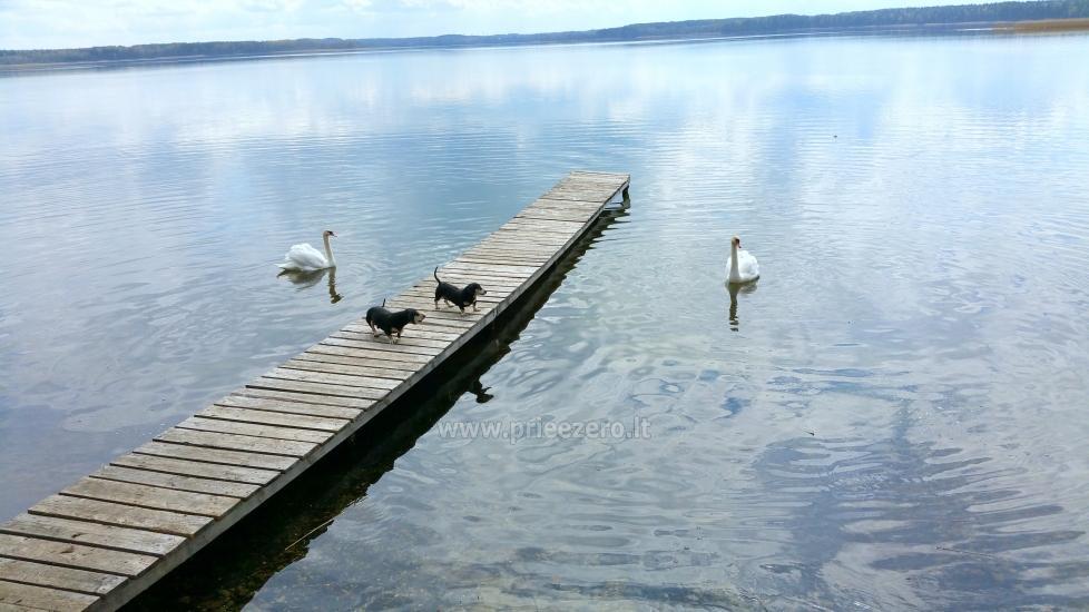 Lauku sēta tuvu Luodis ezerā Lietuvā - 4