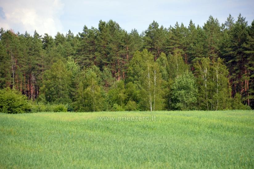 Lauku sēta Vainiūnai in Lazdijai reģionā, Lietuva - 58