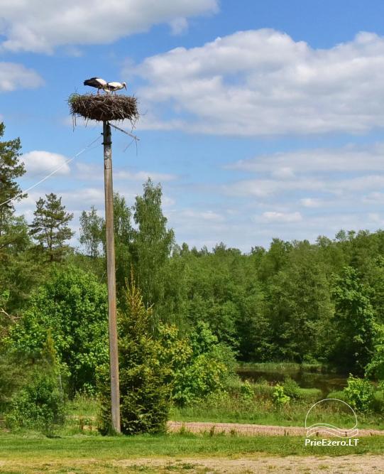 Brīvdienu mājas viensētā Čičiris ezera krastā - Lauryno sodyba - 30