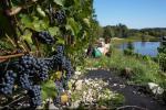 Brīvdienu māja netālu no vīna, 1-6 personām / Teniss - 6