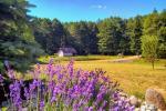 Baltā pagalms pie ezera un strauta Lietuvā - 4