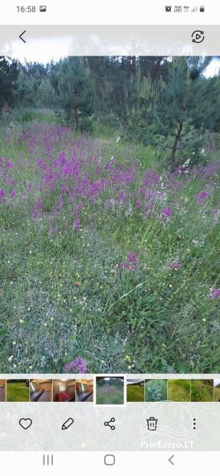 Relaksācija reālā laukos - lauku mājas Priežu mežs - 8