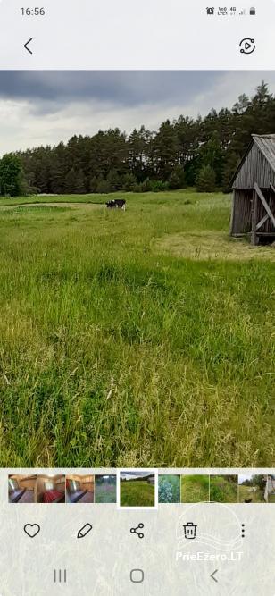 Relaksācija reālā laukos - lauku mājas Priežu mežs - 9