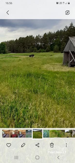 Relaksācija reālā laukos - lauku mājas Priežu mežs - 14