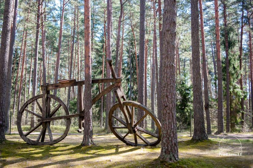 Lauku saimniecība pasākumiem Zelta mežs - 10