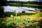 Izmitināšana un atpūta Galadusis ezera krastā - 5