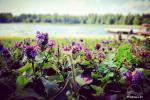 Izmitināšana un atpūta Galadusis ezera krastā - 8
