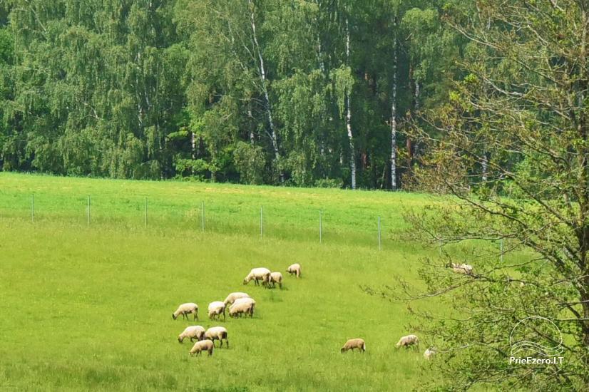 Lauku sēta pie Ilmedas ezera, Lietuvā, Molētu reģionā - 32