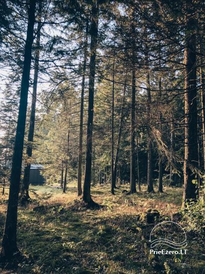 Neliela un kvalitatīva atpūtas oāze meža ielokā - 3