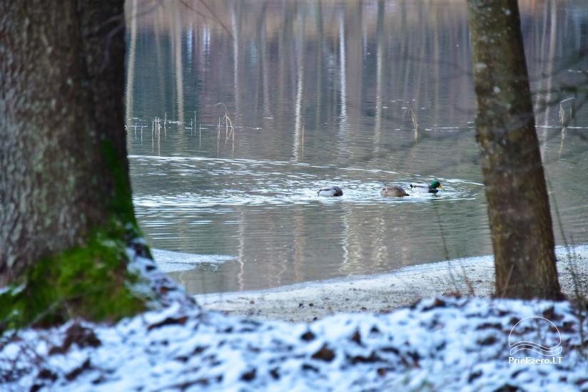 Medus pirts Trakai pie ezera Skasitis - 34