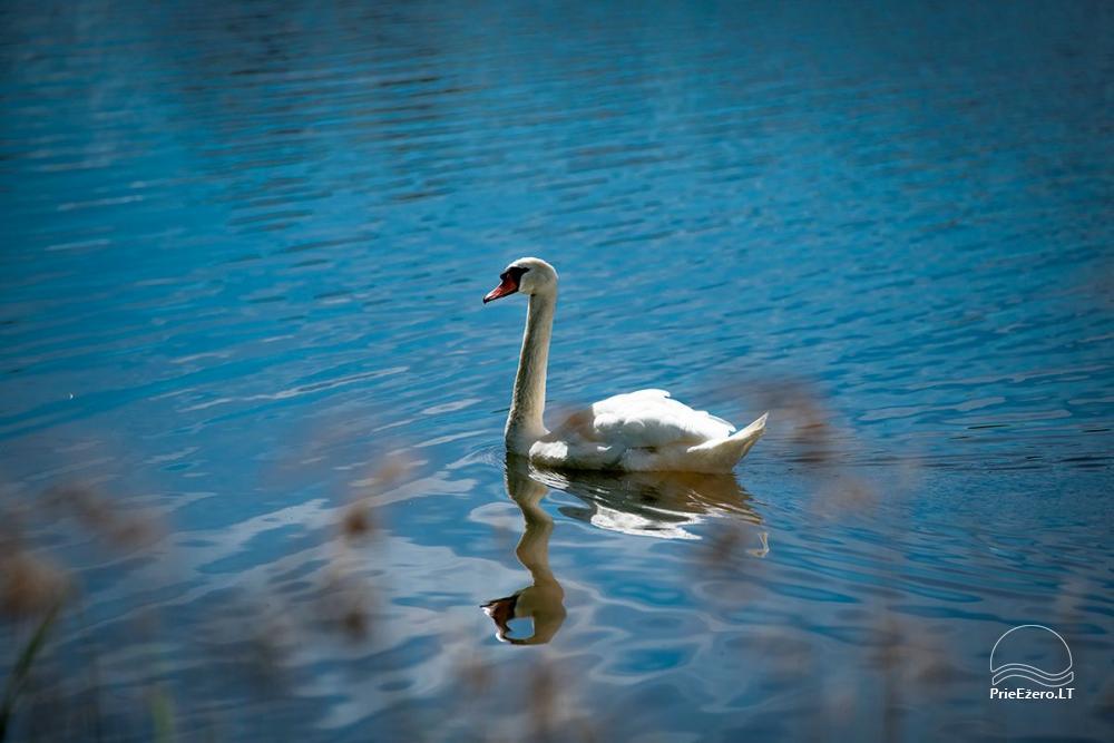 VieniKrante - viensēta romantiskai vai ģimenes atpūtai ezera krastā - 13