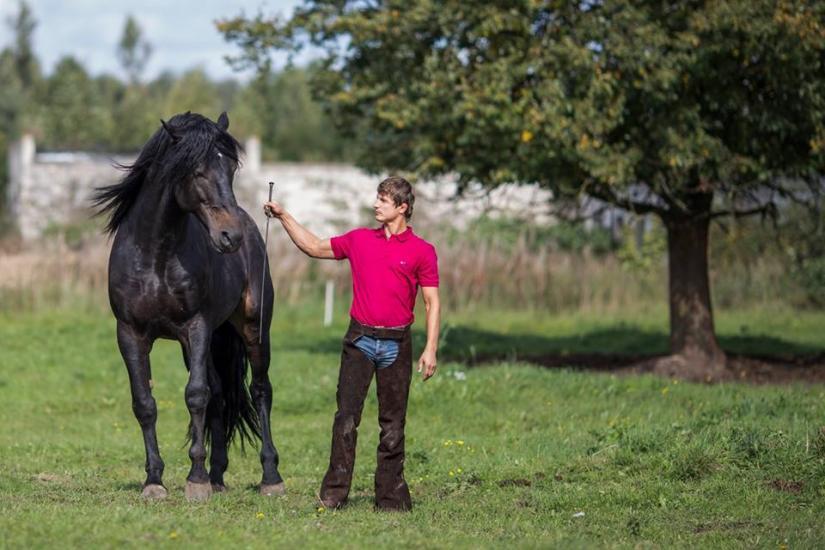 Zirgu izjādes, zirgu apmācība - 1