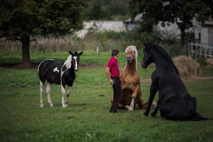 Zirgu izjādes, zirgu apmācība - 2