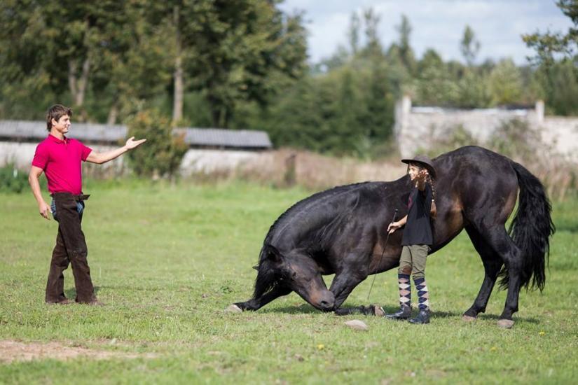 Zirgu izjādes, zirgu apmācība - 3