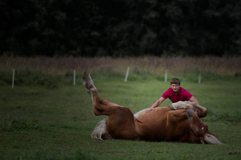 Zirgu izjādes, zirgu apmācība - 5