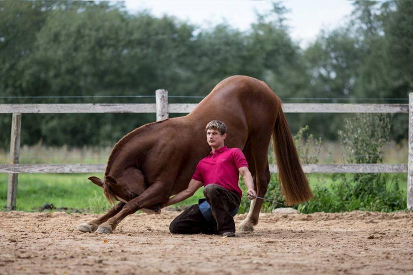 Zirgu izjādes, zirgu apmācība - 7
