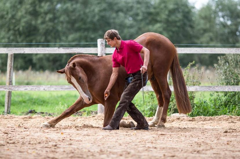 Zirgu izjādes, zirgu apmācība - 8