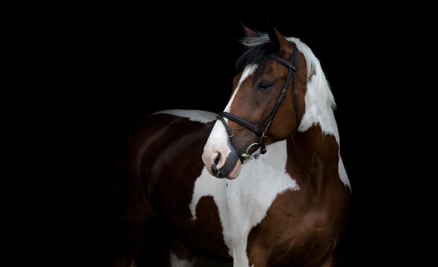 Zirgu izjādes, zirgu apmācība - 10