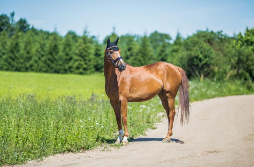 Zirgu izjādes, zirgu apmācība - 11