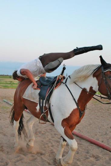 Zirgu izjādes, zirgu apmācība - 13