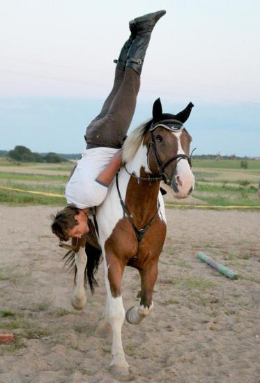 Zirgu izjādes, zirgu apmācība - 14
