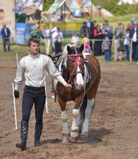 Zirgu izjādes, zirgu apmācība - 17