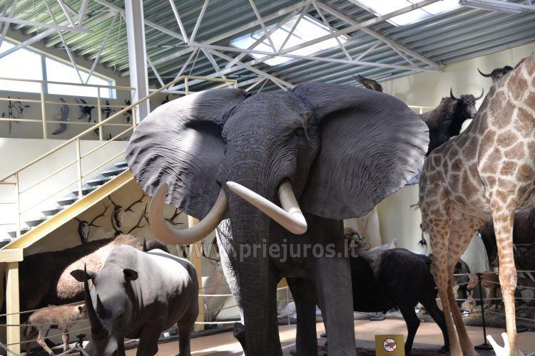 Mini zoo parks, safari Kārkle viesnīcā Gamtos Perlas *** - 1