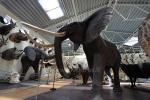 Mini zoo parks, safari Kārkle viesnīcā Gamtos Perlas *** - 2
