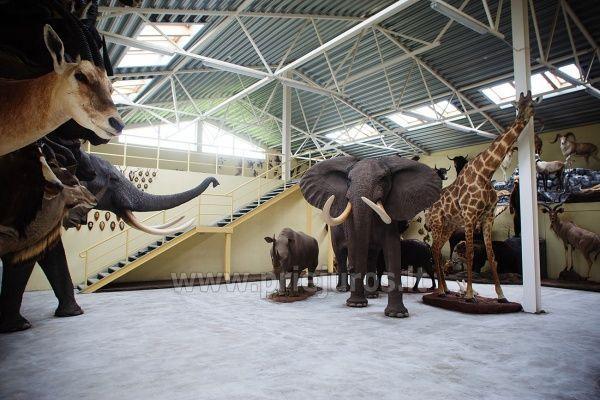 Mini zoo parks, safari Kārkle viesnīcā Gamtos Perlas *** - 3
