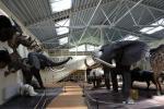 Mini zoo parks, safari Kārkle viesnīcā Gamtos Perlas *** - 4
