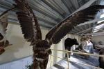 Mini zoo parks, safari Kārkle viesnīcā Gamtos Perlas *** - 8