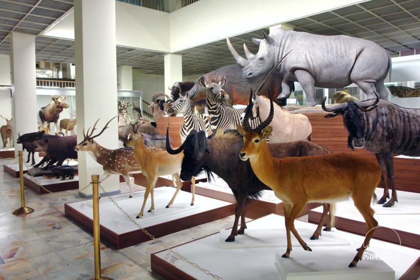 Kauņas zooloģijas muzejs - 4