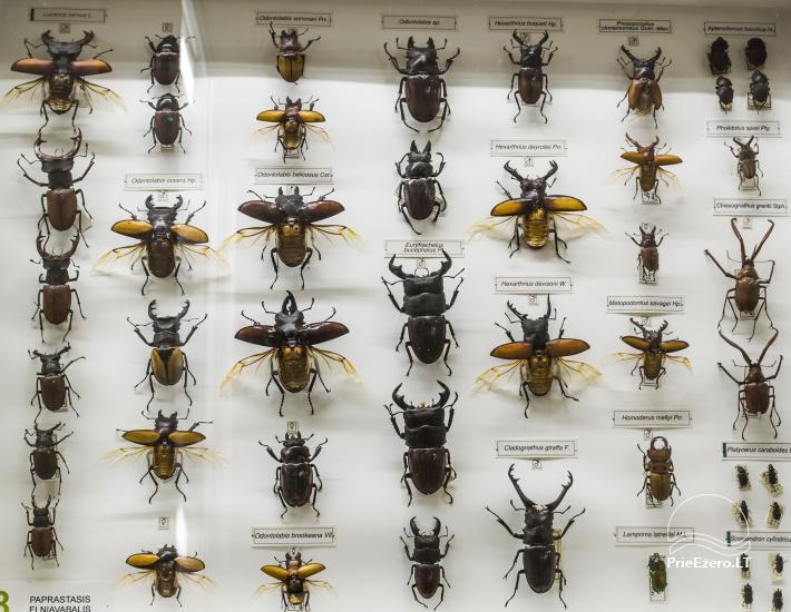 Kauņas zooloģijas muzejs - 7