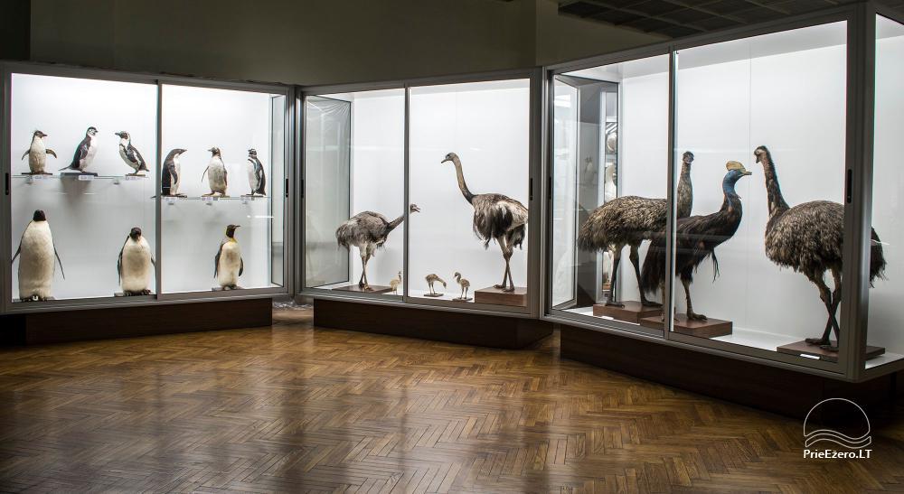 Kauņas zooloģijas muzejs - 8