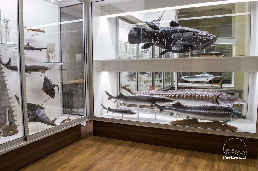 Kauņas zooloģijas muzejs - 9