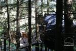 Telts kokā - 5
