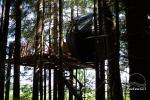 Telts kokā - 6